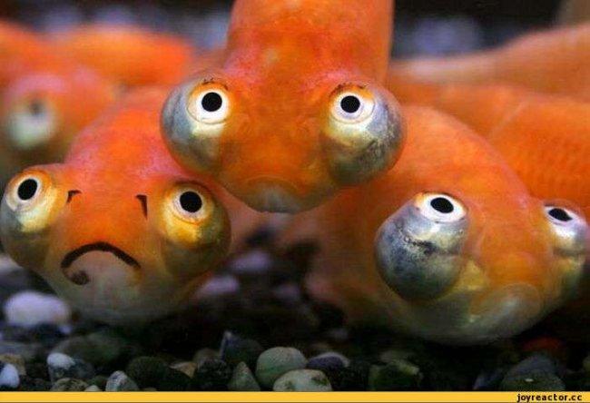 смешные картинки рыбы